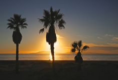 Sunset palm trees Royalty Free Stock Photography