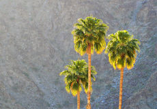 Sunset Palm Trees Stock Images