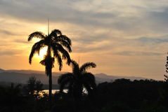 Sunset with palm trees. Two palm trees at sunset in Jamaica, cloudy sky in the caribbean royalty free stock image