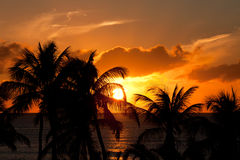 Sunset with palm trees Stock Photo