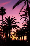 Sunset in Palma de Majorca. Sunset with palm trees on a summer evening in Palma/Majorca, Spain Stock Photography