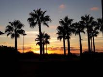 sunset palmowi drzewa Zdjęcia Royalty Free