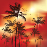 sunset palmowi drzewa ilustracja wektor