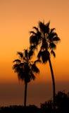 Sunset palms Royalty Free Stock Photography