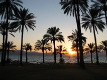 Sunset with palms. Sunset on the sea of galilee with palm trees Stock Photo