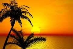 Sunset. Palms. 3 D landscape. Sunset. Tropical Palms Royalty Free Stock Images