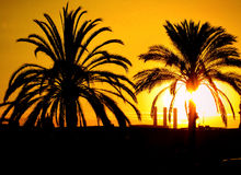 Sunset and palms. The palms and the sunset in Barcelona in the evening, Spain Royalty Free Stock Image