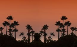 Sunset with palms. Stock Photo