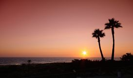 Sunset with palms in Cadiz, Spain. Stock Image
