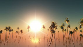 Sunset with palms in fog. 3D rendered. Footage stock video footage