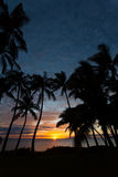 Sunset between the palms in Kihei Royalty Free Stock Photos