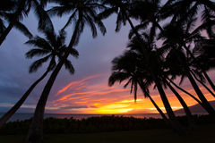 Sunset between the palms in Kihei Royalty Free Stock Photo