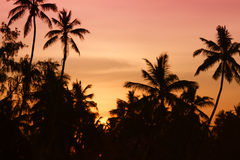 Sunset with palms Stock Photos