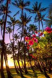 Sunset with Palms Tree and Red Flowers in Maui Hawaii royalty free stock image