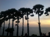 Sunset. Palmtrees are cute Royalty Free Stock Photos