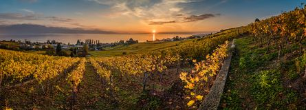 Sunset and panorama over vineyards in Lutry. Sunset over geneva lake and vineyards in Lutry, close to Lausanne, with yellow autumn colors Royalty Free Stock Photos