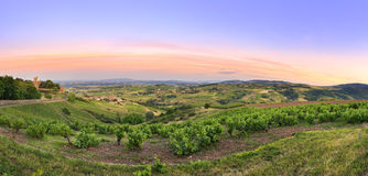 After the sunset, panorama of vineyards of Beaujolais, France Stock Photo