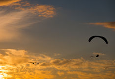 Sunset para gliding. A silhouetted para glider soars towards the setting sun accompanied by seagulls Stock Photos