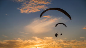 Sunset para gliding. Two silhouetted para gliders soar with seagulls towards the setting sun Royalty Free Stock Photos