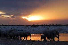 Wild animals parading at the water hole near okaukuejo camp etosha national park in Namibia. Sunset parade of wild animals at the water hole near Okaukuejo Camp Royalty Free Stock Image