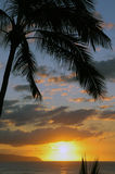 Sunset in Paradise. Palm trees are silhouetted as the sun sets on the North Shore of Oahu, Hawaii Royalty Free Stock Image