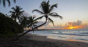 Sunset, paradise beach and palm tree, Martinique island. Sunset, paradise beach and palm tree, Martinique island, French West Indies Royalty Free Stock Image