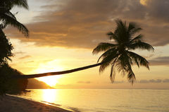 Sunset on paradise island beach stock image