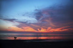 Sunset in paradise. From red to blue, very colorful sunset over the Andaman sea in Thailand. A woman is bending over to collect some shellfish Royalty Free Stock Images