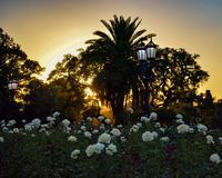 Sunset in the park of flowers royalty free stock photo