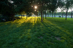 Sunset on park. With green grass and tree shadow Royalty Free Stock Image