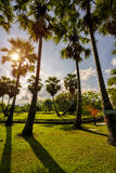 Sunset in park with palm trees and sawamp, green grass Stock Image