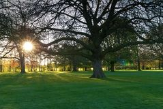 Sunset in park with trees and grass Stock Photography