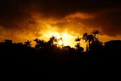 Sunset past tropical silhouette of trees Stock Photography