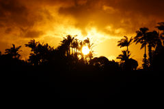 Sunset past tropical silhouette of trees Stock Image