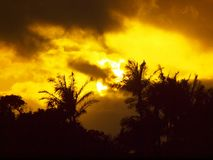 Sunset past tropical silhouette of trees through the clouds Stock Image