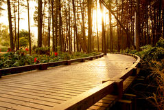 Sunset path Royalty Free Stock Photo