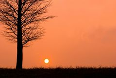 Sunset in a peaceful evening, field view. Sunset in a peaceful evening with bald tree in winter Royalty Free Stock Image
