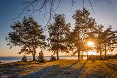 Sunset at the Peipsi lake shore during winter in South Estonia. Sunshine is going through the pines royalty free stock images