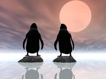 Sunset Penguins Stock Photo