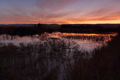 Sunset Penrith Wetlands Royalty Free Stock Photos