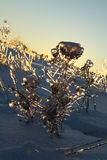 Plants under the ice. At sunset perfectly and blocked sunlight from ice masterpieces Stock Photo