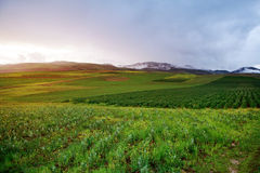 Sunset in Peru. Sunset over green agricultural fields in Peru on a cloudy evening royalty free stock photos