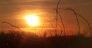 Sunset photo in the field.  Stock Photography