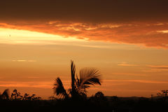 Sunset. Photo image  with sunset  and plants Royalty Free Stock Photo