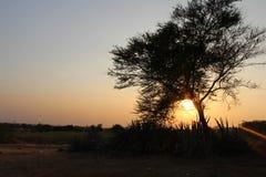 Sunset. Photograph taken through the Babool tree Royalty Free Stock Photo