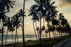 A sunset picture of palm trees along the coast in Ghana. This is a A sunset picture of palm trees along the coast in Ghana stock image