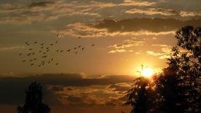 Sunset with pigeons Royalty Free Stock Photography