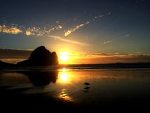 Sunset Piha Beach, New Zealand. With bird stock photo