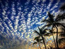 Sunset with pillow clouds and palm trees in Islamorada Florida keys stock images