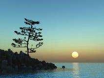 Sunset pine Stock Image